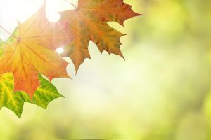 selling-your-house-in-autumn-with-a-guardian-realty