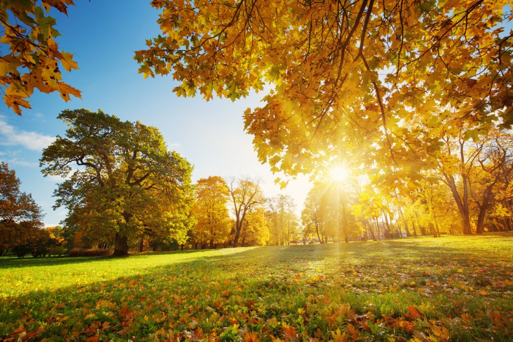 selling-your-house-in-autumn-with-guardian-realty