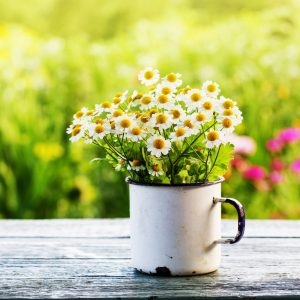 spring-flowers-selling-your-home