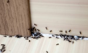 rental-pest-control